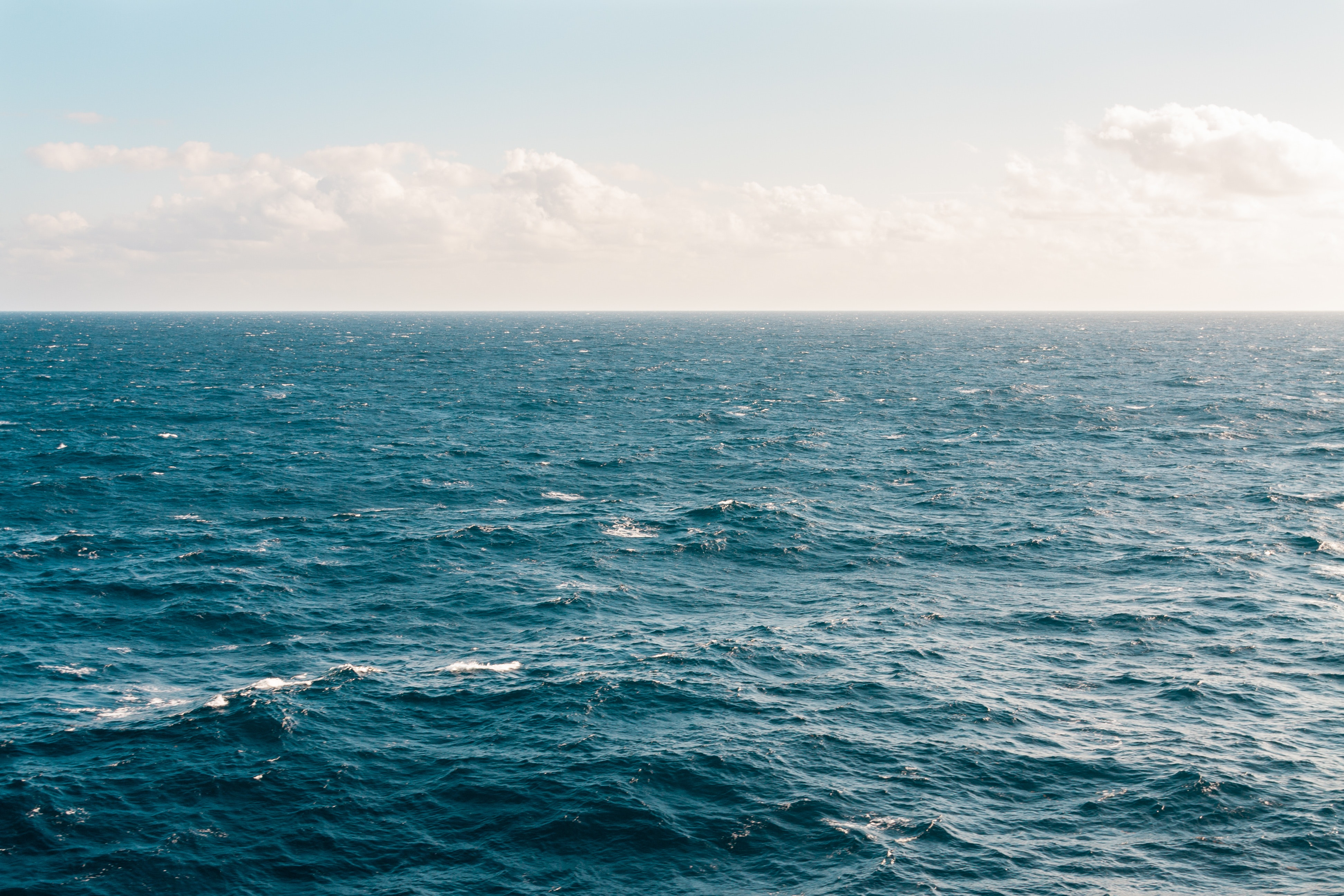 Marine and coastal leaders urge government to adopt FEA Sustainable Oceans and Coasts Strategy's picture