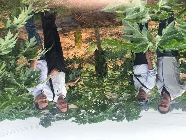 葉教授(左二)及張武男教授(右二)與胡志明農林大學農學院教授Dr. Nguyen Chau Nien (左一)合影,張教授及越南農友公司總經理周財億(右一)視察交保苗試驗,交保木瓜種植校內農場,生長狀況良好。